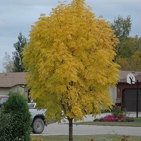 Deciduous Tree Photo